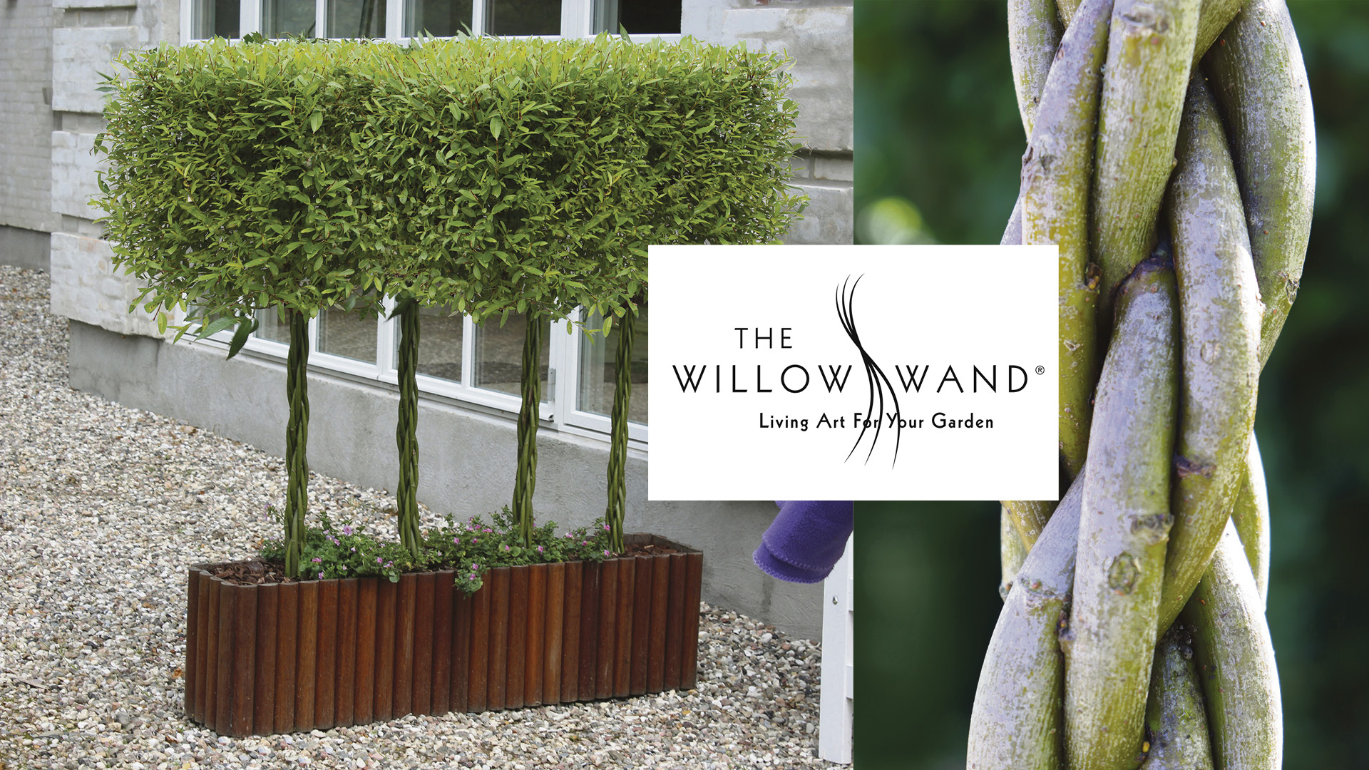 Win a ready-grown decorative trough of award-winning Willow Wands® Worth £200