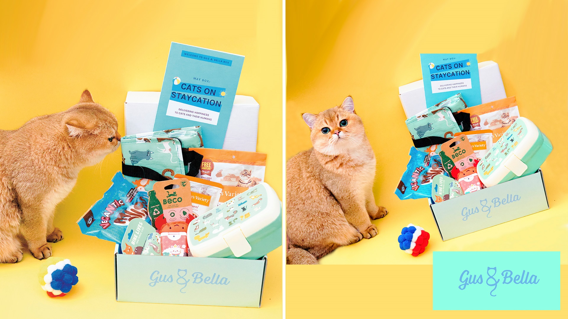treat box subscription for your cat